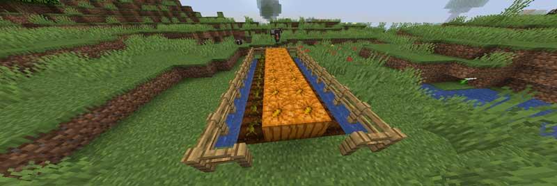 カボチャ畑の作り方